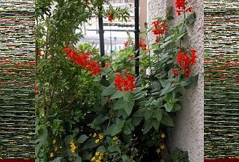 Balcon en plein sud que planter voir - Planter hortensia plein soleil ...