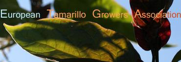 Etga_european_tamarillo_growers_ass