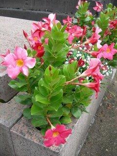 Top 3 des fleurs dete pour cimetieres