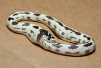 serpent qui se mange la queue