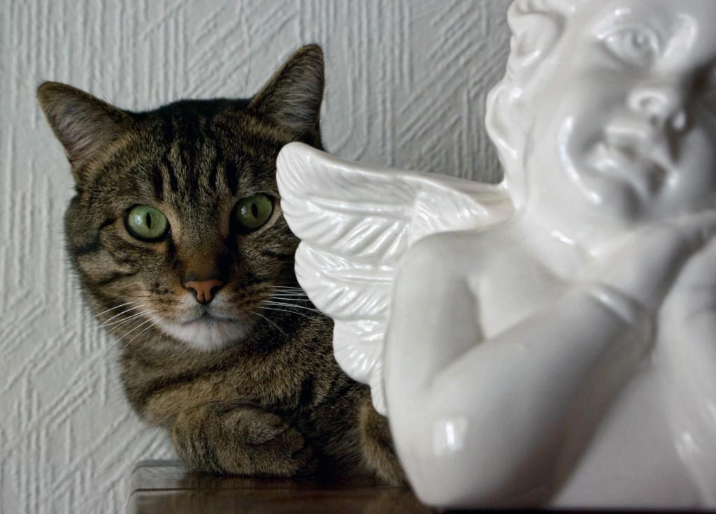 le-chat-reveur-1024x768.1223472983.jpg