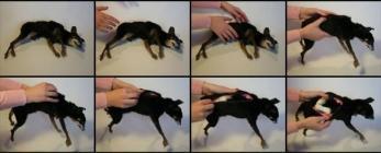 chien convertible en chat premières étapes