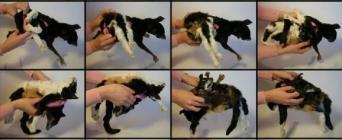 chien convertible en chat suite