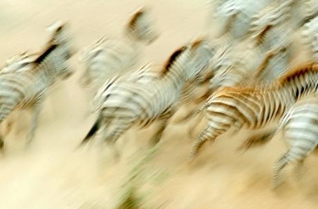 Serengueti07_2