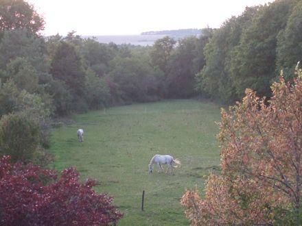 Sèche Bouteille vue chevaux