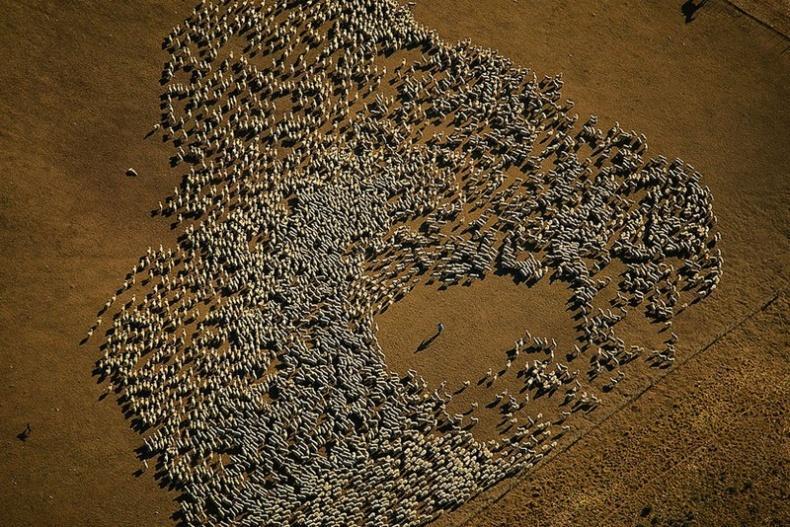 Les photos de Yann Arthus-Bertrand