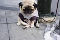 petit chien triste attaché