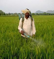 Les agriculteurs premières victimes des pesticides ?