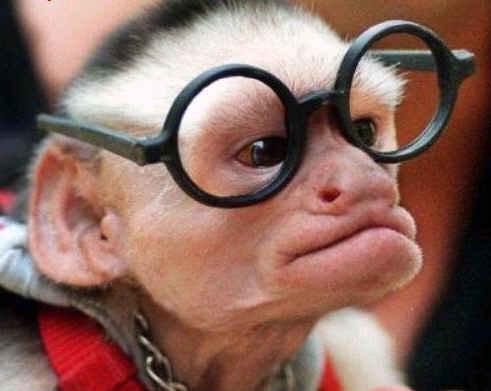 singe lunettes
