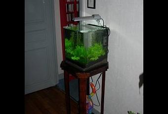 L 39 Aquarium Crevettes Un Mini Jardin Aquatique Paperblog