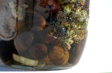 Olives du lucques la goyave paperblog - Peut on manger les olives piquees par la mouche ...