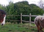 chevaux maison: trois mois commune
