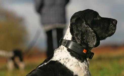 Orange aide les chiens perdus