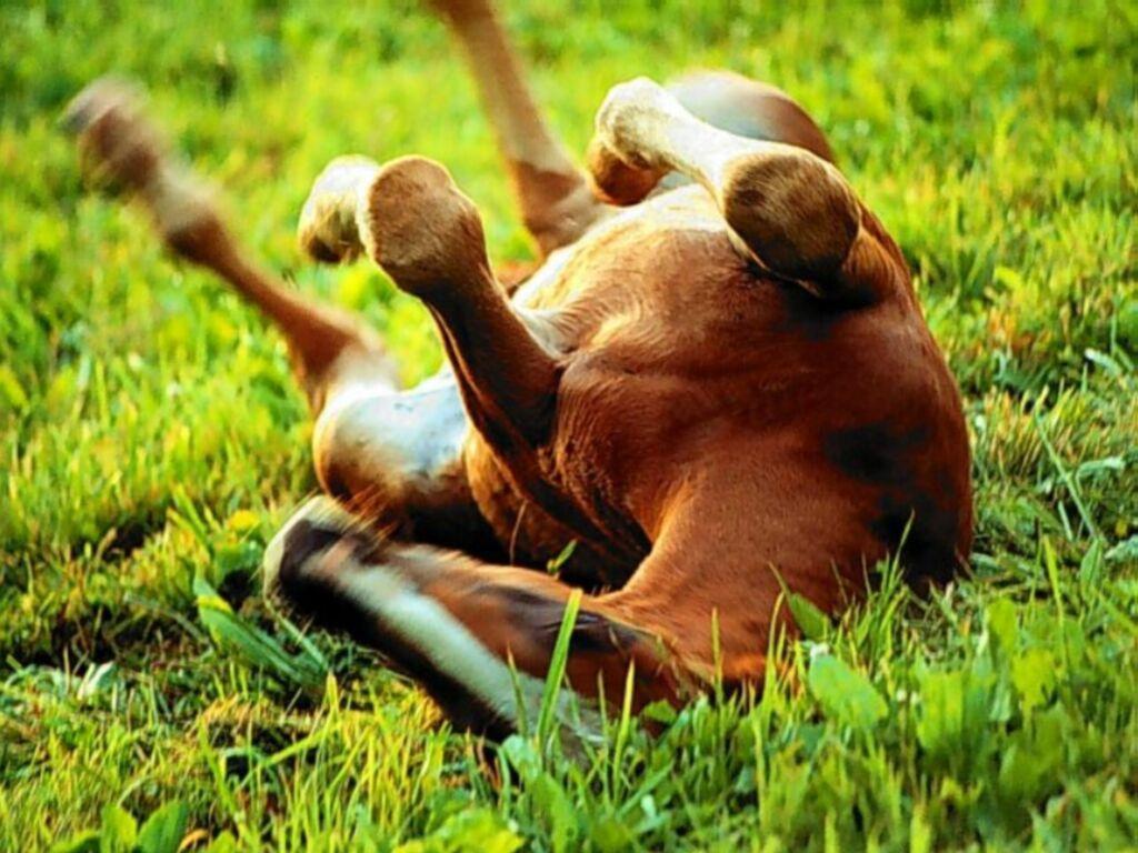 118 origine cheval2 Le respect du cheval photo cheval