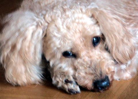 Beyoncé : elle a abandonné son chien , elle se met la PETA à dos !