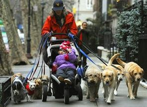 new-york-dog-sitter-16-dec-2008.1232250096.JPG