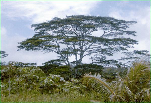 tahiti-la-brousse.1232103103.jpg