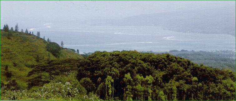 tahiti-325-m.1232103094.jpg
