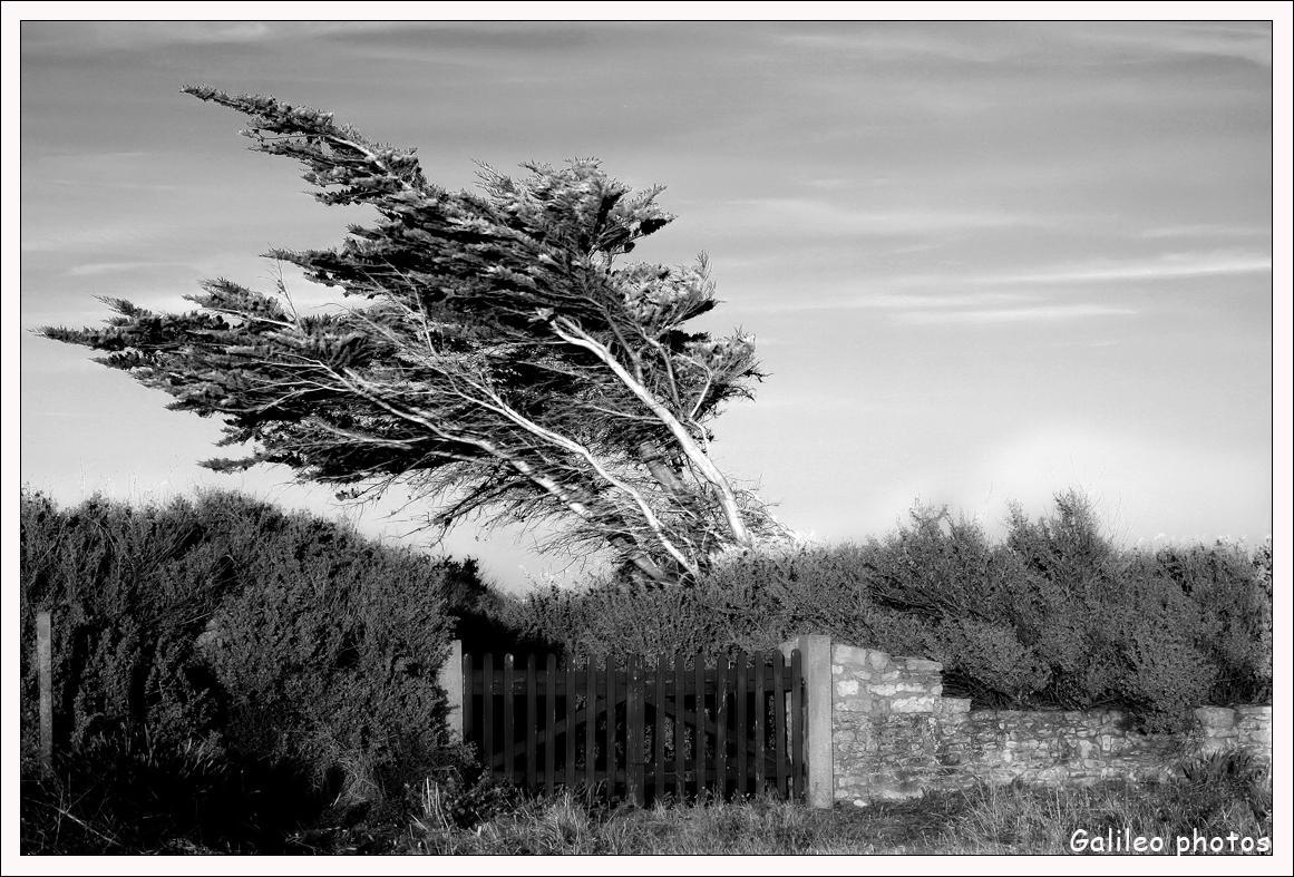 vent Le printemps arrive...... photo cheval