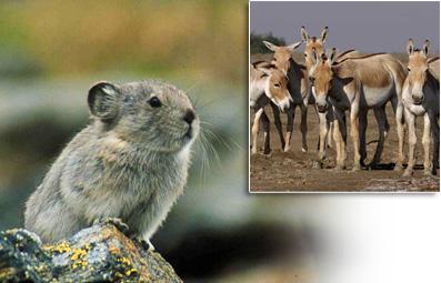 Article : La faune du désert de Gobi
