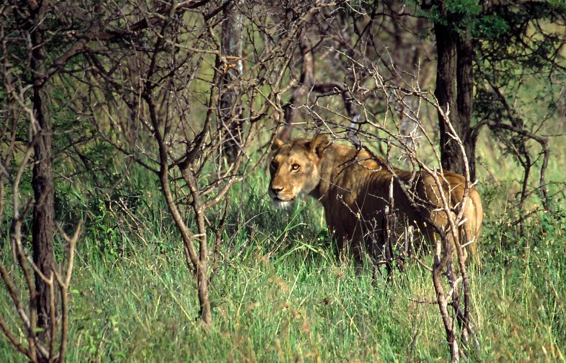 Safari Tanzanie (2)