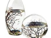 Découvrez l'ÉcoSphere Emerveillez-vous devant véritable écosystème
