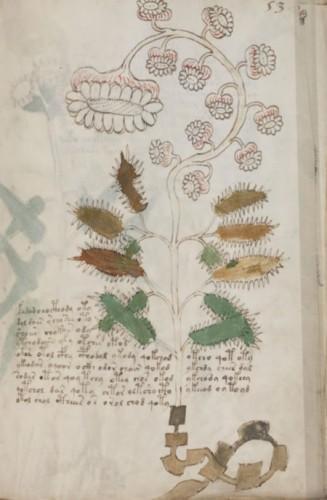 Le mystère du manuscrit de Voynich[/ Mystere-manuscrit-voynich-L-1