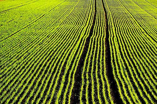 Agriculture : SARKOZY n'a rien compris