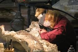 paléontologue