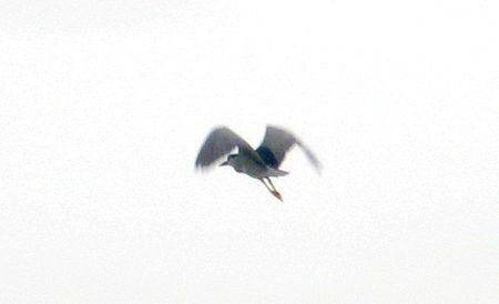 oiseau1