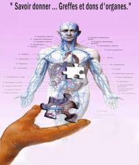 Le don d'organe, dans la perspective d'un projet de société humaniste