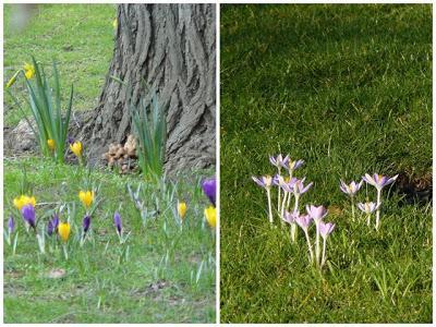 Ca sent le printemps