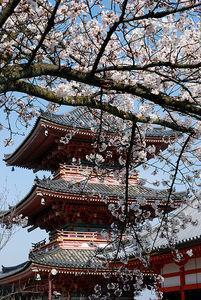 pagode_et_cerisier