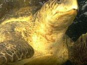Inde construction d'un port danger tortues