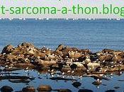 8ème participation help-beat-sarcoma-a-thon! (préparé homme!)