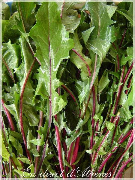 RETOUR DU MARCHE : Salade verte et pamplemousse