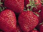Dessert rêve fraises