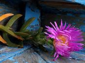 simple regard posé fleur voilà journée remplie bonheur Céline BLONDEAU