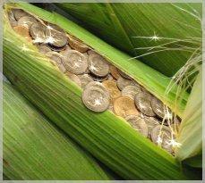 Boycottez les carburants verts : piège à cons fait pour affamer les pauvres...