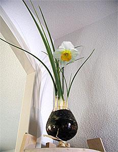 Des narcisses en vase