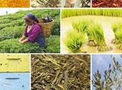 Alimentation biologique: saine naturelle