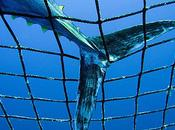 Pêche thon rouge suicide annoncé selon Greenpeace