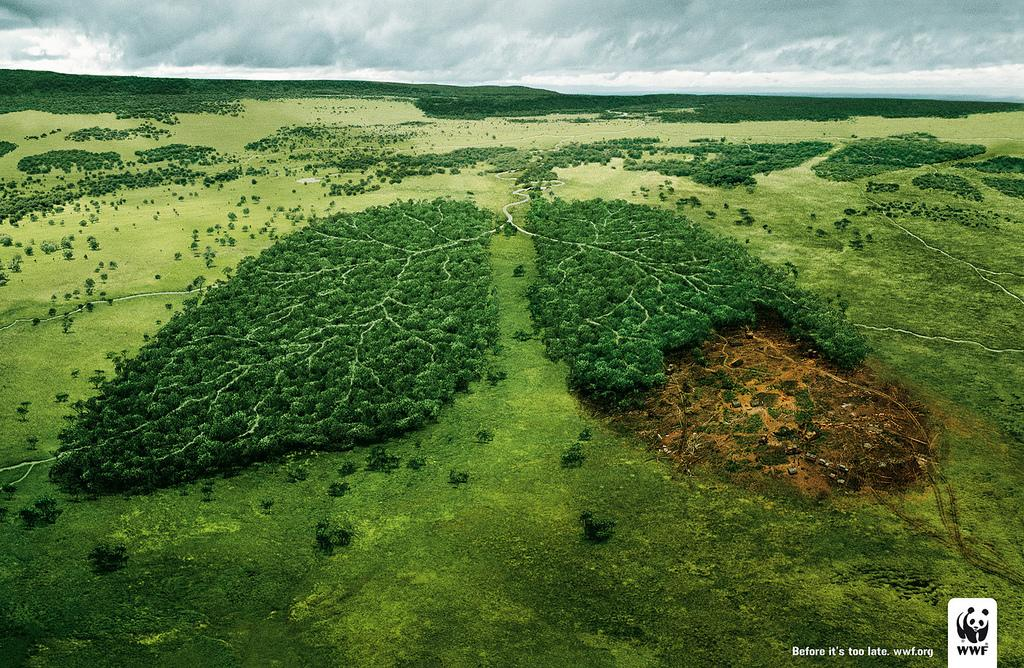 http://media.paperblog.fr/i/185/1850642/foret-est-poumon-terre-L-1.jpeg