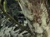 parcours forêt