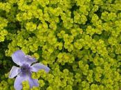 Bleu Bleu, jardin