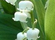 Bonne fete travail Bouquet muguet