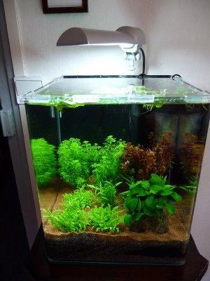 D coration aquarium nano - Decoration pour aquarium ...