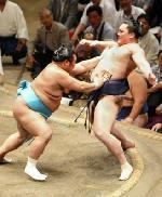 communauté du sumo