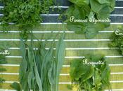 """Mesclun """"herbes"""" printemps"""