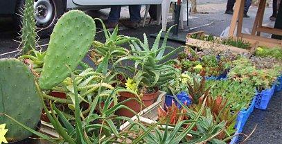 Les plantes ne craignent pas la pluie paperblog - Plantes qui ne craignent pas le gel ...
